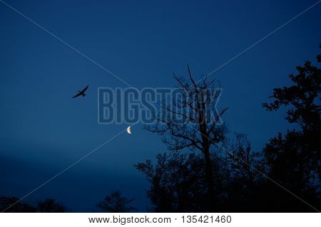 Flying bird with spread wings and trees silhouette with the moon in the back