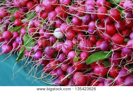 Raw Organic Small Garden Red Radishes At The Market
