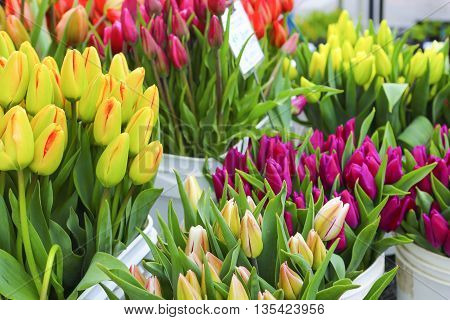?olorful Tulips Close Up In A Flower Shop