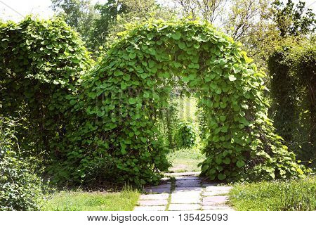 Beautiful green leaves arch in botanical garden