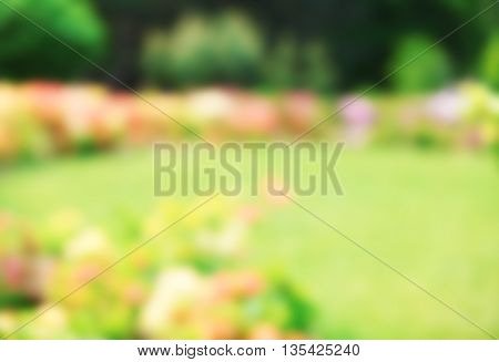 Flower bed with bright colourful flowers in botanical garden, unfocused