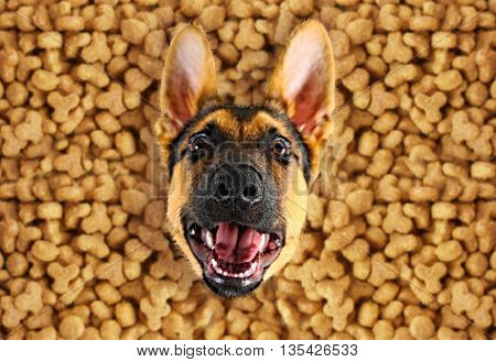 Funny dog with food, top view