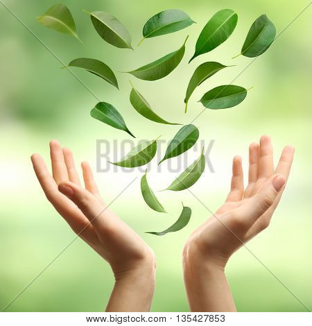 Green leaves falling into woman hands, on green nature background