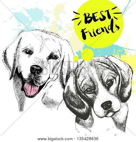 Vector hand drawn concept of labradoe retriever and beagle frienship. Color hand drawn domestic dog illustration. Decorated with blue blots. Best friends.