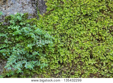 Moss on the wall at Tropical Forest