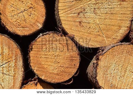The fronts of wooden logs. Wooden texture logs.