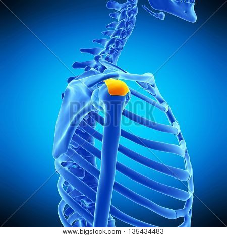 3d rendered, medically accurate illustration of the subdeltoid bursa