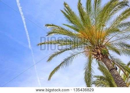 Palm tree against blue sky. Background with place for text.