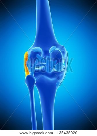 3d rendered, medically accurate illustration of the fibular collateral ligament
