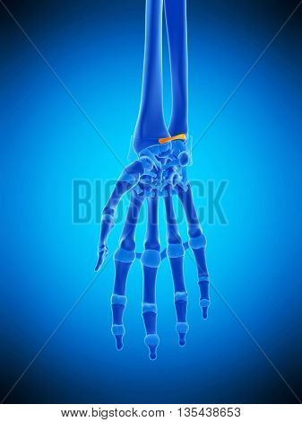 3d rendered, medically accurate illustration of the volar radioulnar ligament