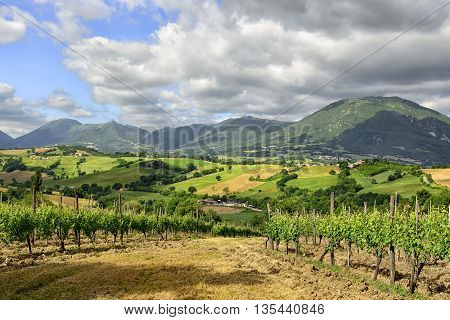 Typical Landscape Marche Italy