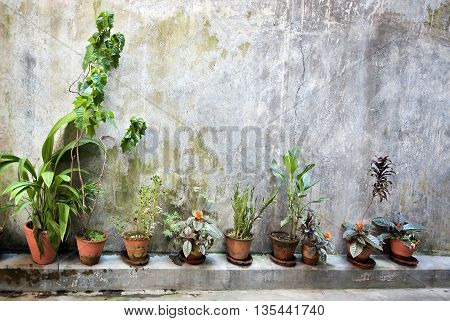The green plants in a pots in on grange wall creates a beautiful background