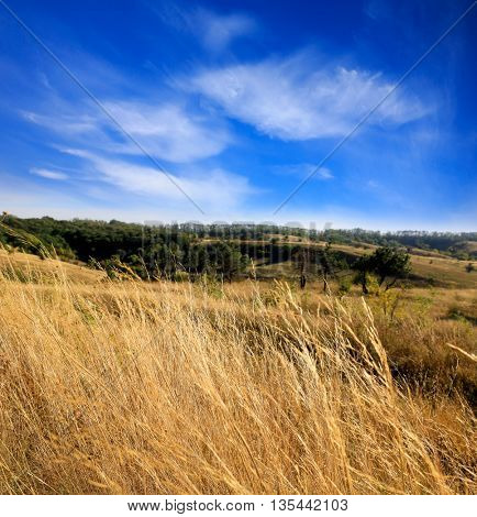 Nice sunny scene with dry grass and autumn sky