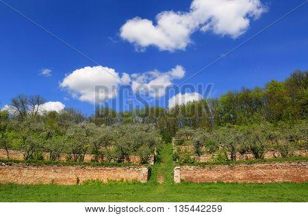 old apple garden on terraces in sunny spring day. Ukraine, singening terraces.
