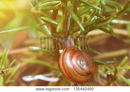 Vintage Photo Of Snail Effect Blur And Soft