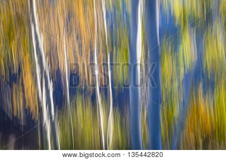 Abstract landscape of autumn birch trees growing on lake shore in the fall. Image produced by camera motion.
