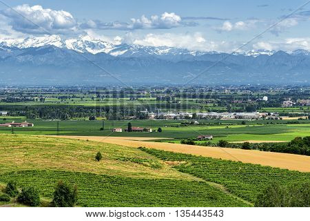 Country landscape of Monferrato (Asti Piedmont Italy) at summer with vineyards and the Alps in background