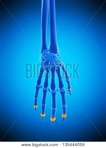 3d rendered, medically accurate illustration of the distal joint capsules