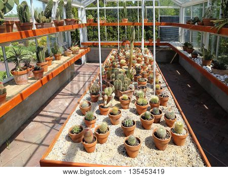 Collection of cacti on the table in the greenhouse.