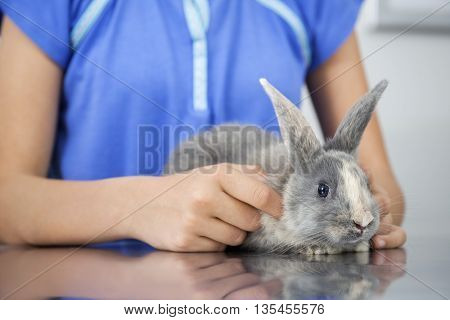 Cute Rabbit With Girl In Clinic