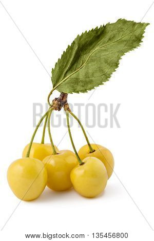 Fresh ripe organic white cherries, branch with leaves, isolated on a white background
