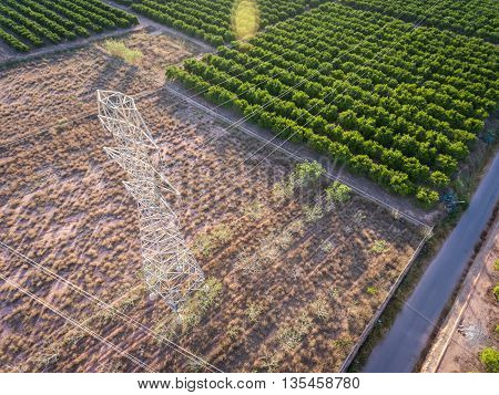 Top view of electrical tower over orange tree field at dusk