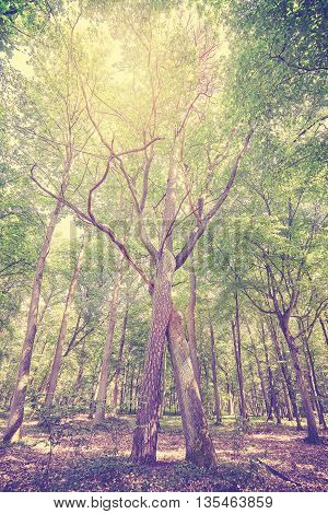 Vintage Toned Braided Trees In A Forest