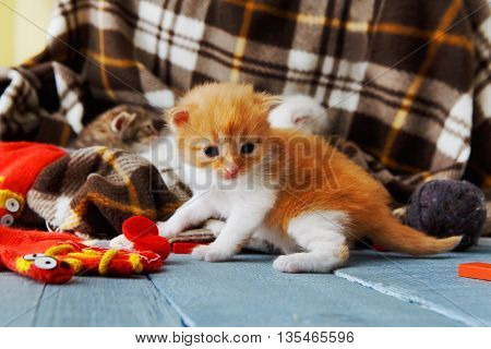 Ginger orange newborn kitten near a plaid blanket on a serenity blue wood background play with mitten. Funny small cat crawling