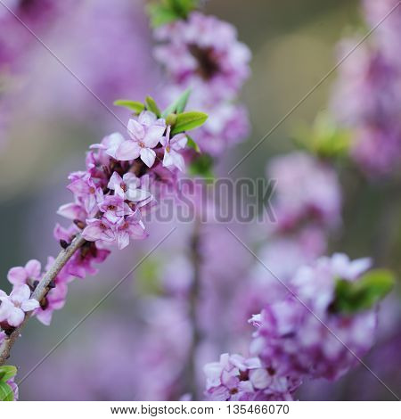 Spring flowers on blurred greenery foliage background