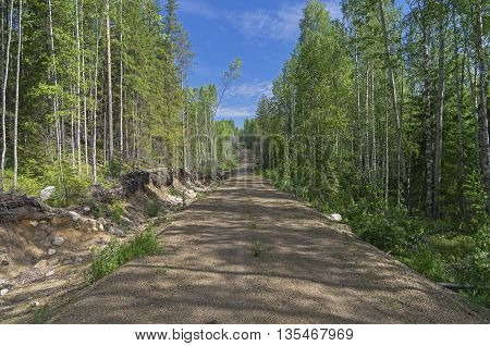 Forest road away into the distance. Sunny day in June. Karelia Russia.