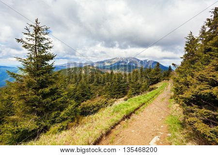 A path for tourists in the Carpathian mountains