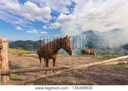 Horses, feeding on grass at high-land pasture at Carpathian Mountains in rays of sunset