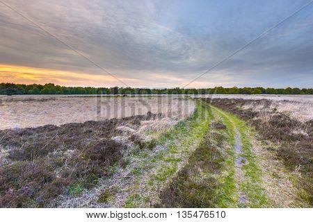 Heathland At Ballooerveld During Sunset