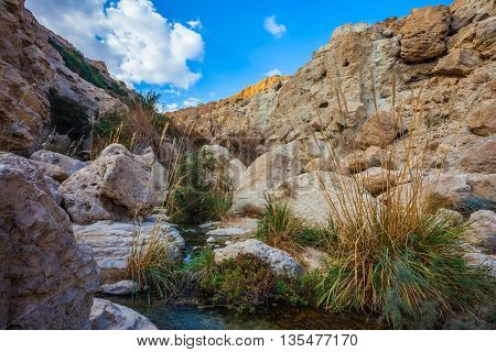The stream of cold clear water flows on the beautiful gorge of Ein-Gedi, Israel. Typical Middle Eastern landscape