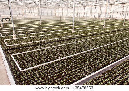 Large Modern Nursery Greenhouse