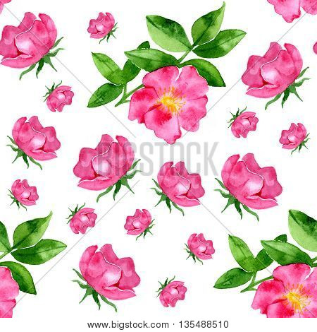 watercolor seamless pattern with wild rose on white