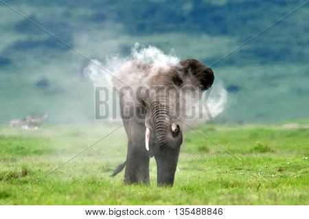 Elephant throwing dust at himself
