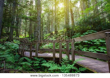 Wooden path through temperate rain forest. Pacific Rim National Park.