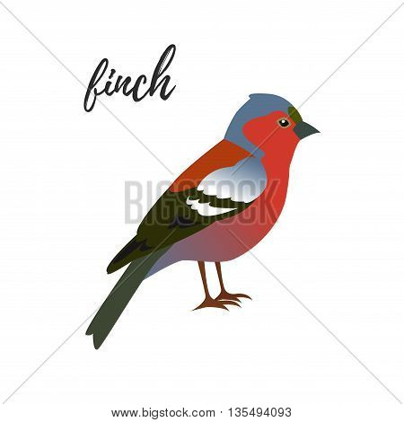 Isolated finch bird on a white background vector illustration