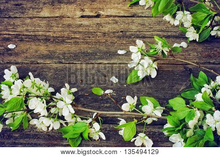 blossoming plum branch lies on old wooden table retro style