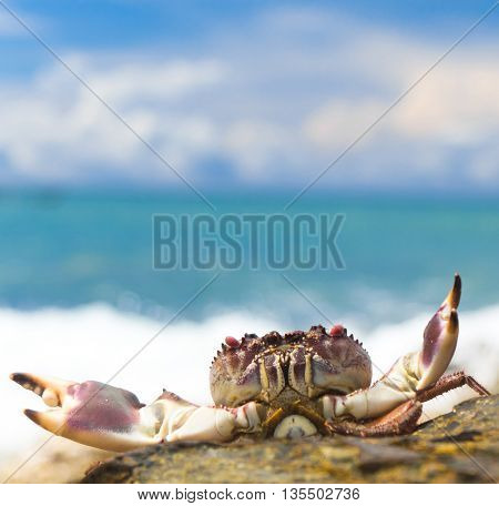 Alien Creature On the Shore