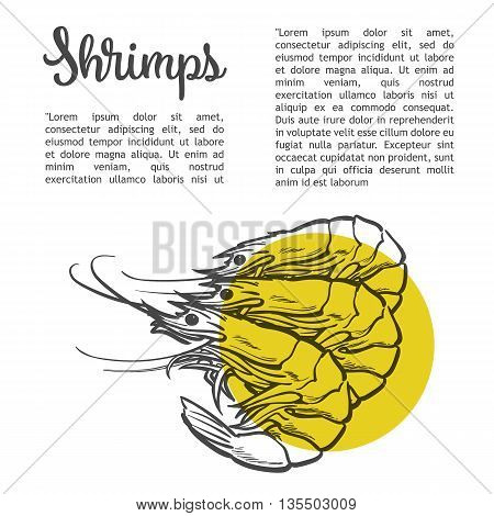 Shrimp sketch drawn by hand, three shrimp on a white background, sea food, the menu of shrimp, lettering label, menu, with seafood