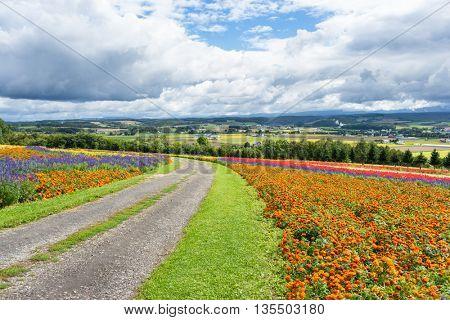 dirt road in flower farm in japan hokkaido
