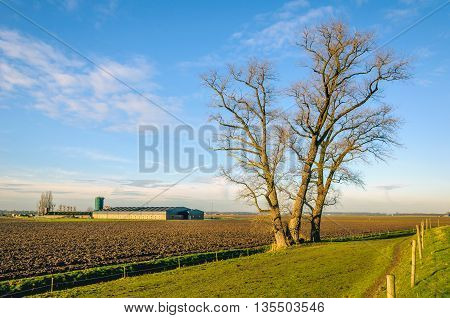 Large bare tree with irregular shaped branches at the base of an embankment in the Netherlands. It's a sunny day in the winter season.