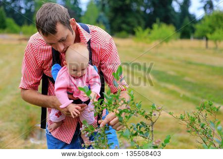 Father And Baby With Baby Sling Carrier Picking Up Blueberries