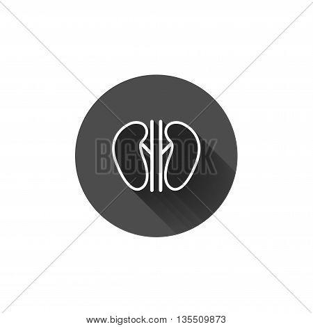 Vector kidneys icon. Human interrnal abdomen organs