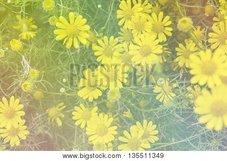 flowers made with color filters spring bloom retro colour filter background