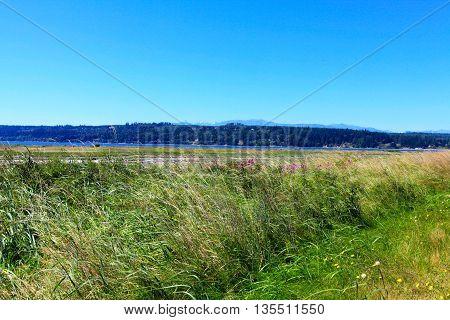 Mystery Bay, Marrowstone Island. Olympic Peninsula. Washington State.