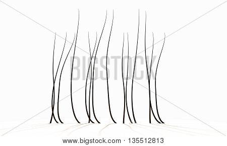 Microscopic Hair Fibers