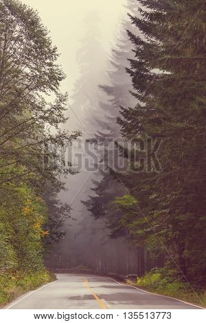 Magic forest of misty